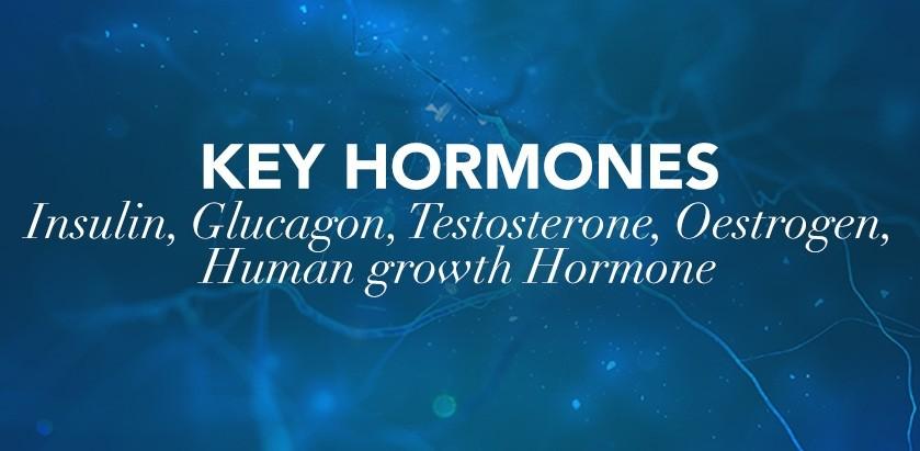 SPORTS MASSAGE: KEY HORMONES