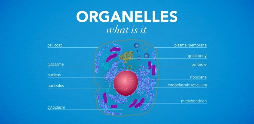 cms fitness courses - organelles