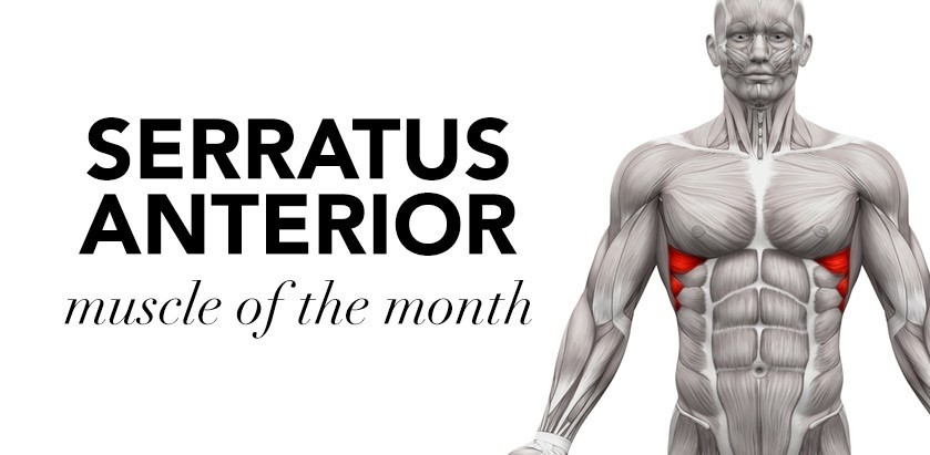 MUSCLE OF THE MONTH: SERRATUS ANTERIOR