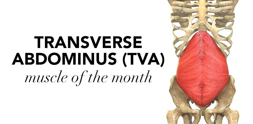 MUSCLE OF THE MONTH: TRANSVERSE ABDOMINUS (TVA)