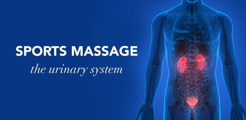 SPORTS MASSAGE: THE URINARY SYSTEM